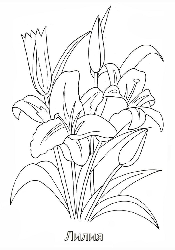 раскраски цветы распечатать тюльпаны
