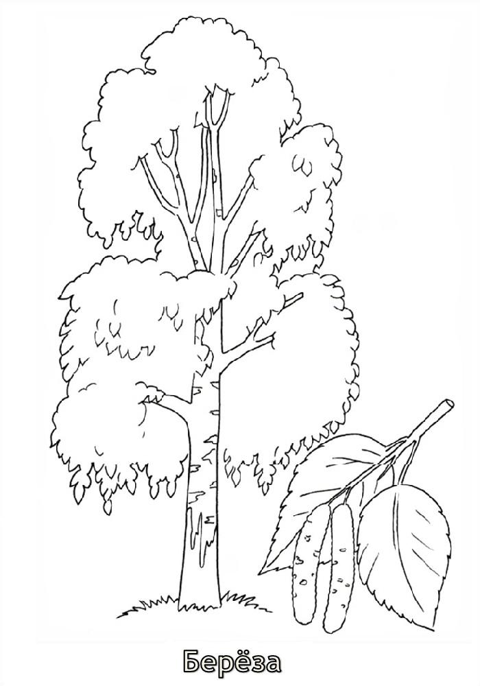 Дерево раскраска