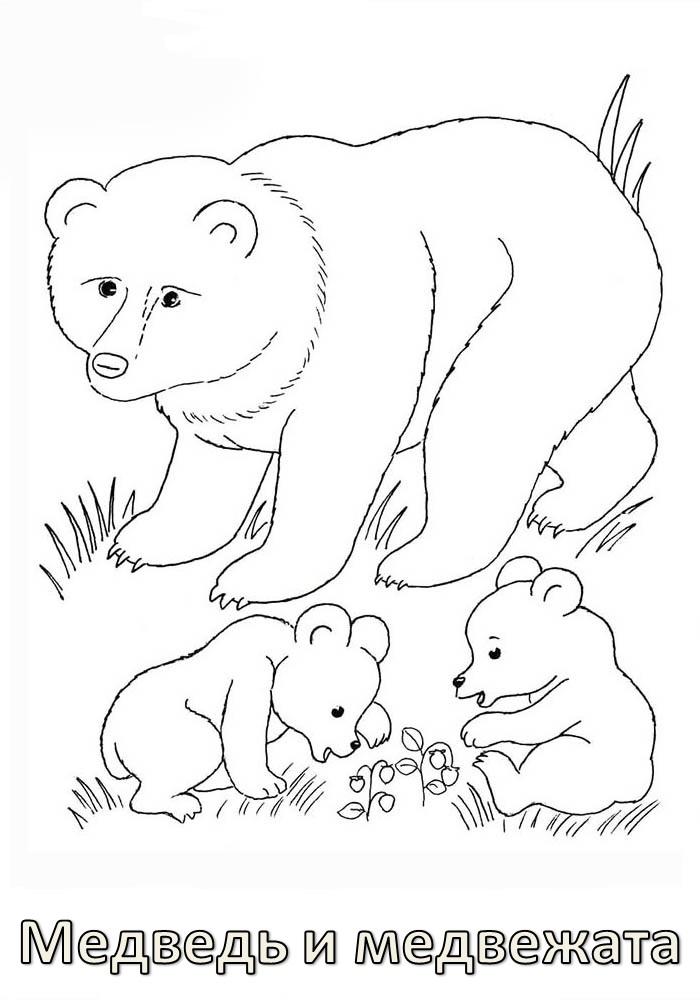 Раскраски картинки дикие животные