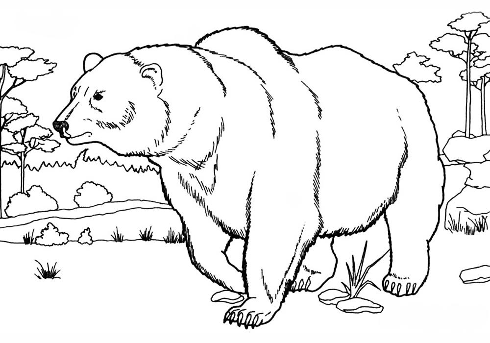 Раскраска рисунки медведь