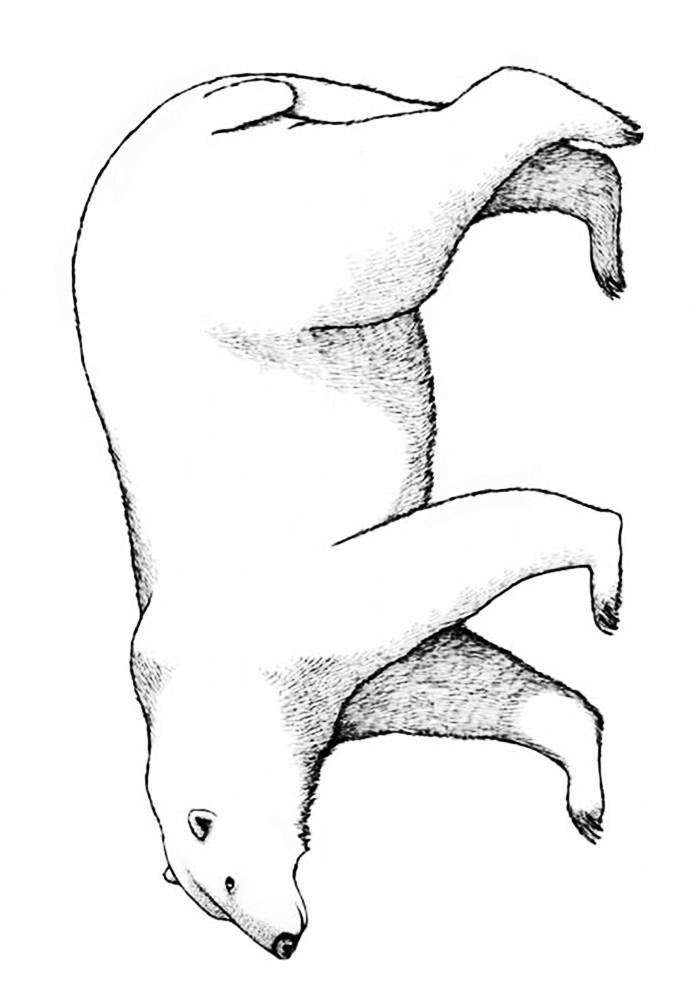 Раскраски медведь и белка