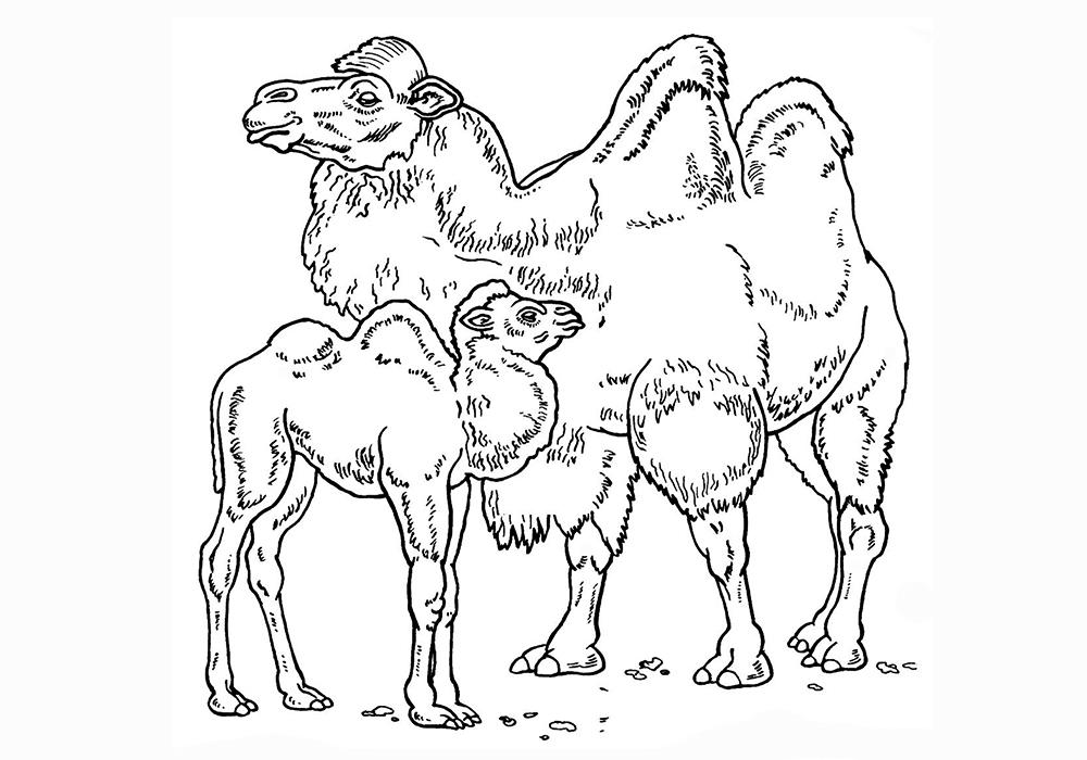 Раскраска дикие животные с детёнышами