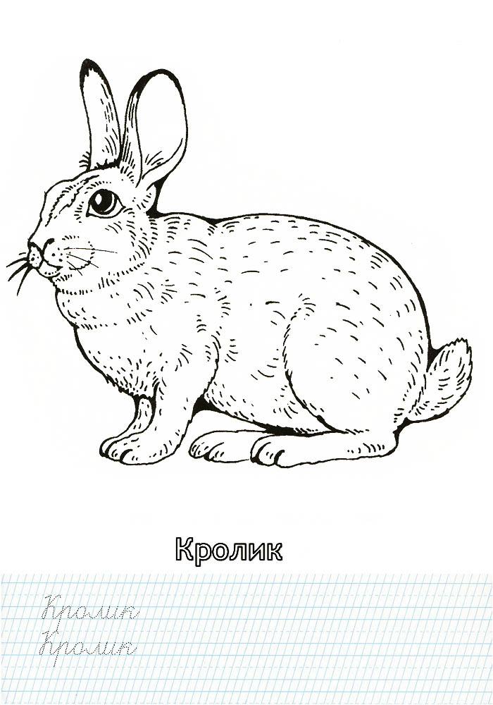 Раскраска кролик для детей