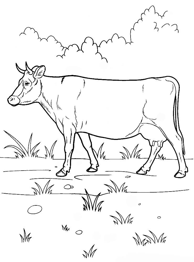 Картинка свинья раскраска для детей картинки