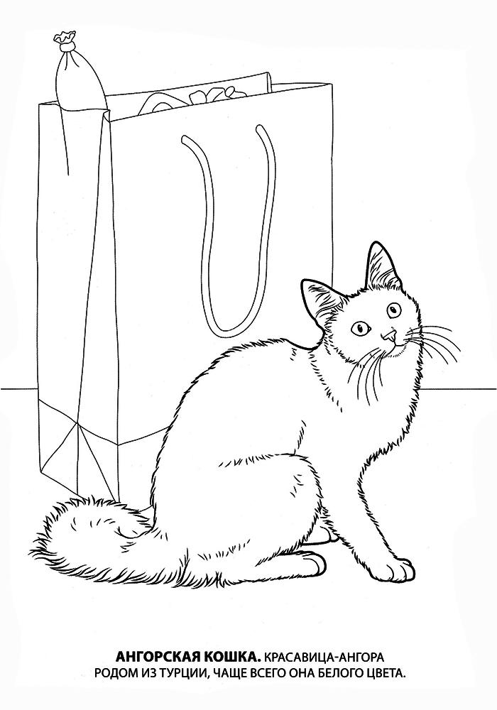 Распечатать котят раскраска