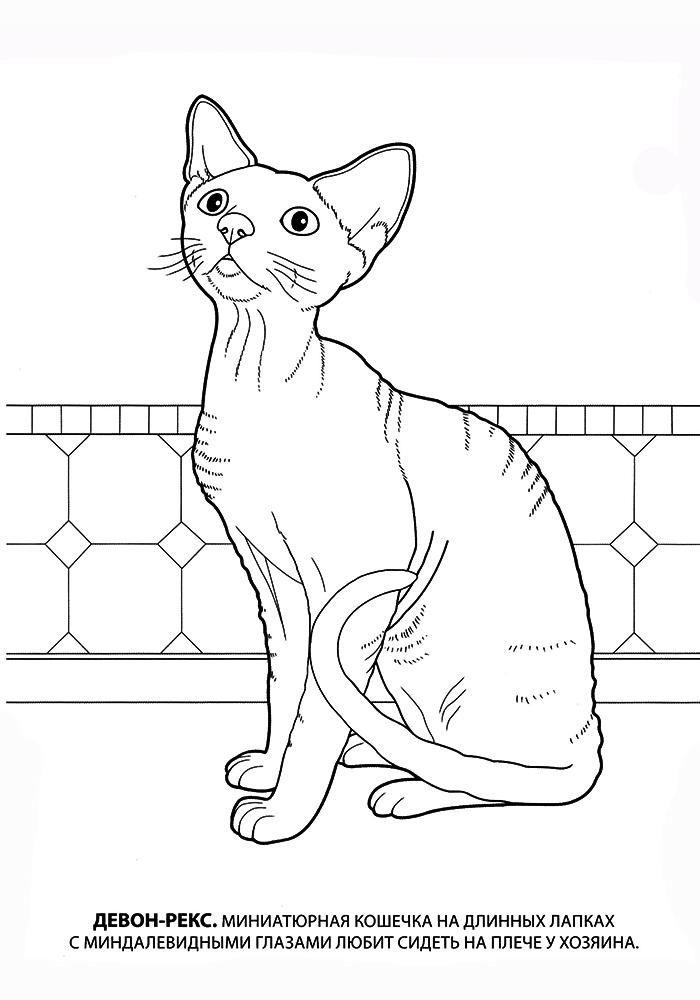 Раскраски про котят и кошек
