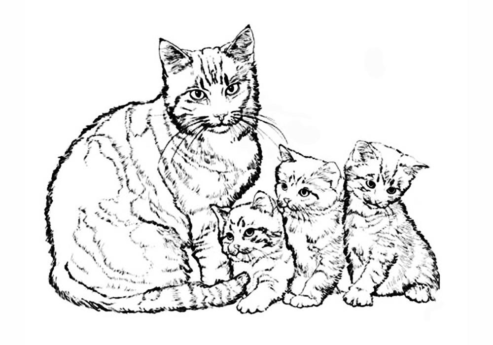Картинки раскраски кошка с котенком