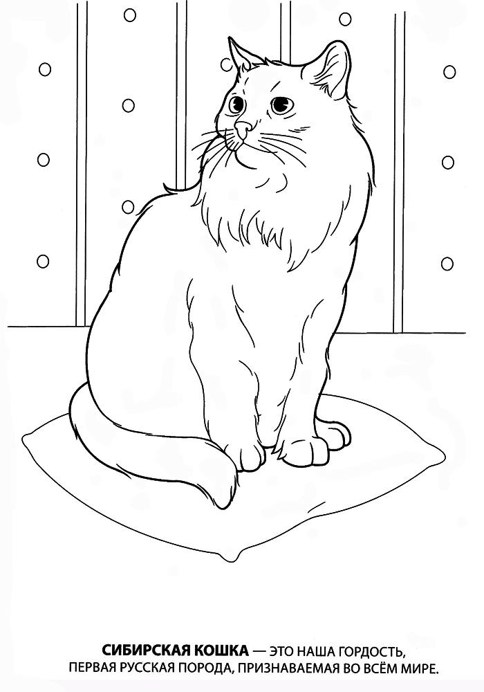 раскраски котята распечатать