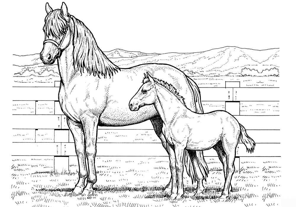 Раскраски лошадьми с жеребятами