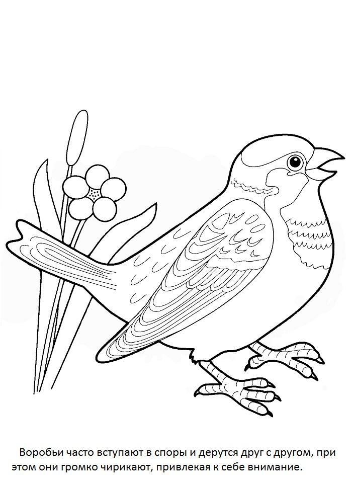 Раскраска вороны и воробья