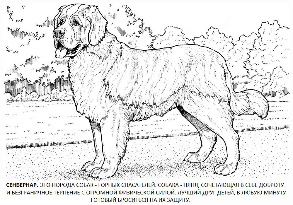Рисунки карандашом породистых собак