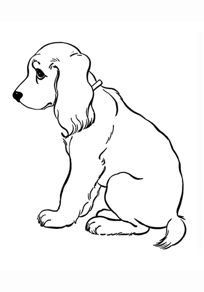 Картинки раскраски про собак