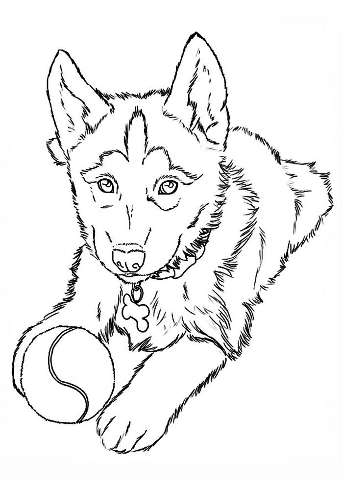 Раскраска щенок для детей