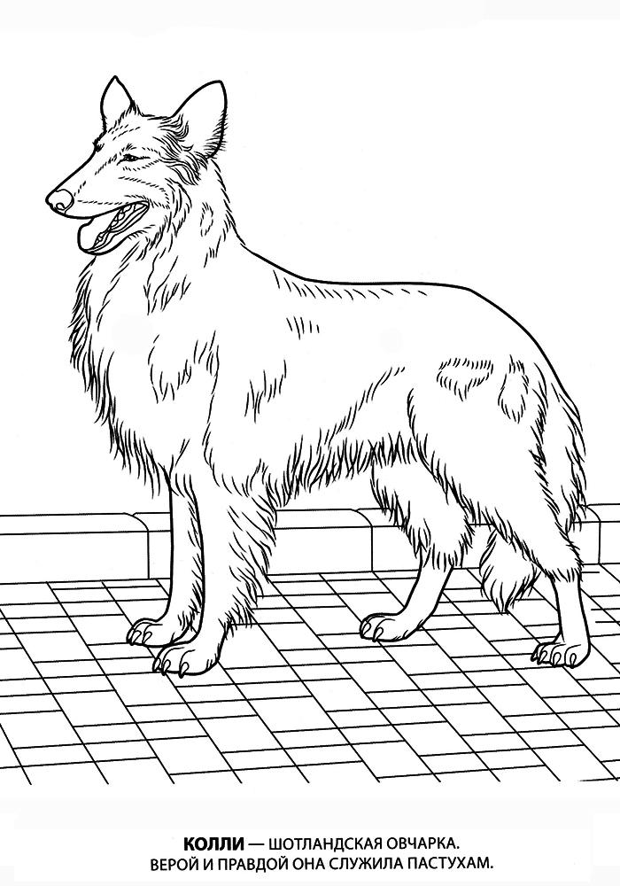 раскраски собак всех пород раскраски собак рисунки собак