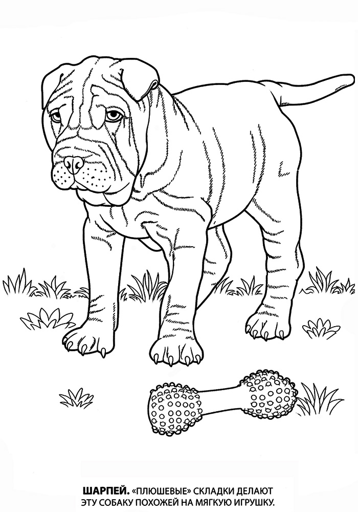Собаки породы раскраска