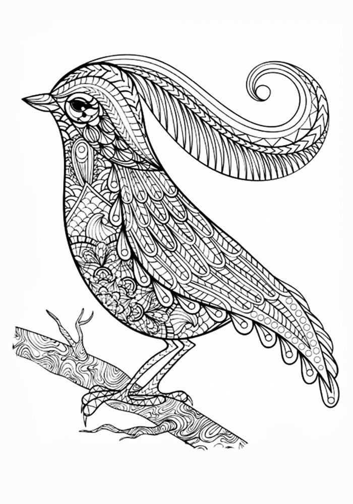 Раскраска антистресс райские птицы