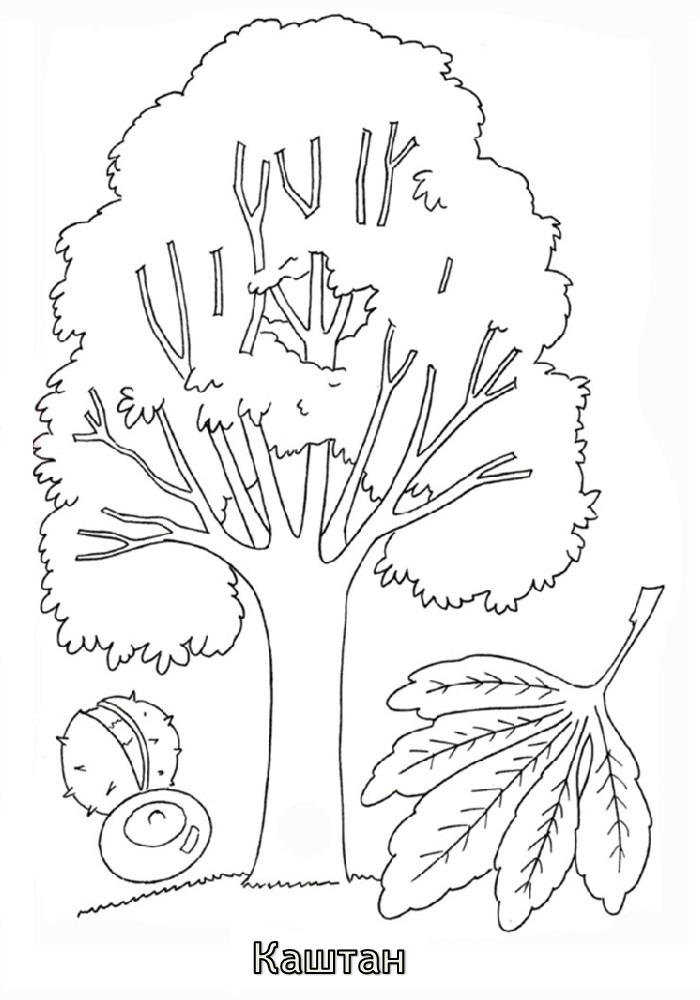 Дерево раскраска для детей