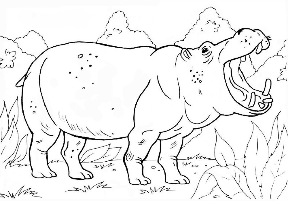 картинки животного мира раскраски нужно открыть