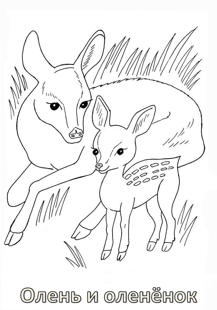Плакат берегите животных раскраска