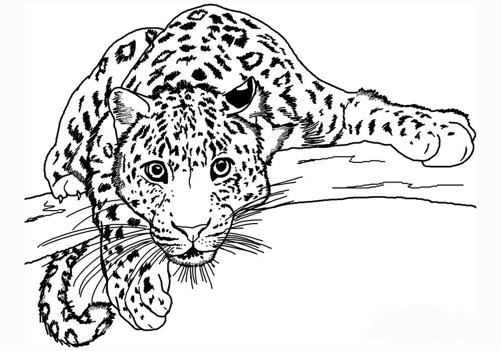 технологии, изобилие картинки с раскрасками животные какая жизнь