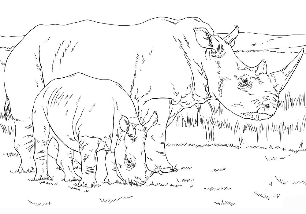 это раскраска носорог распечатать мамочек всегда