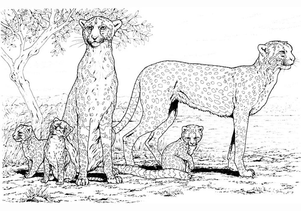 Рисунки больших животных