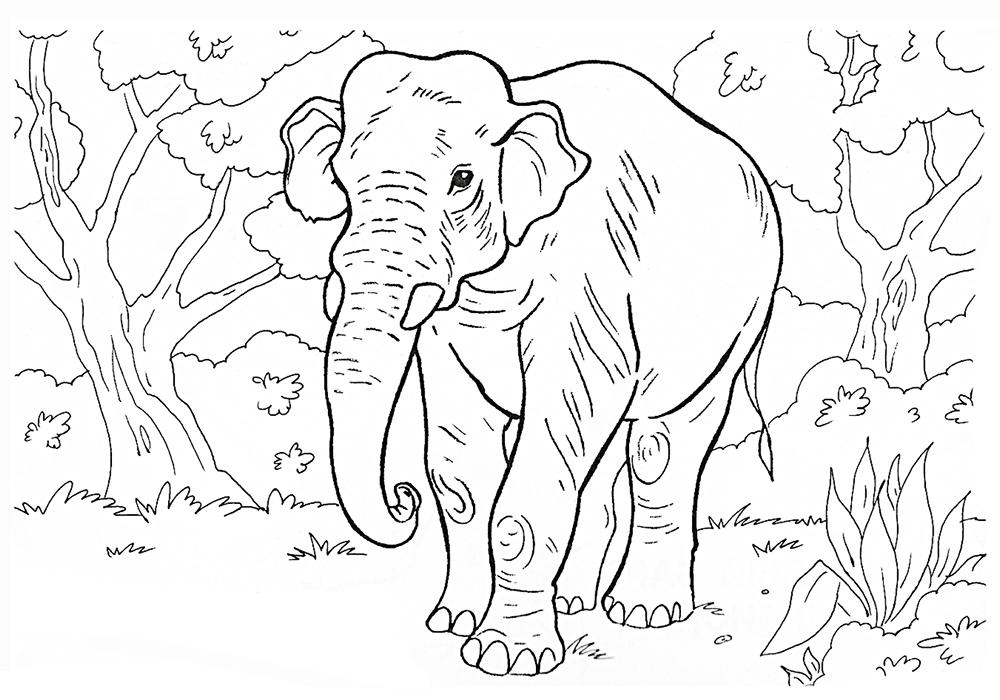 раскрасить картинку животного из красной книги нас