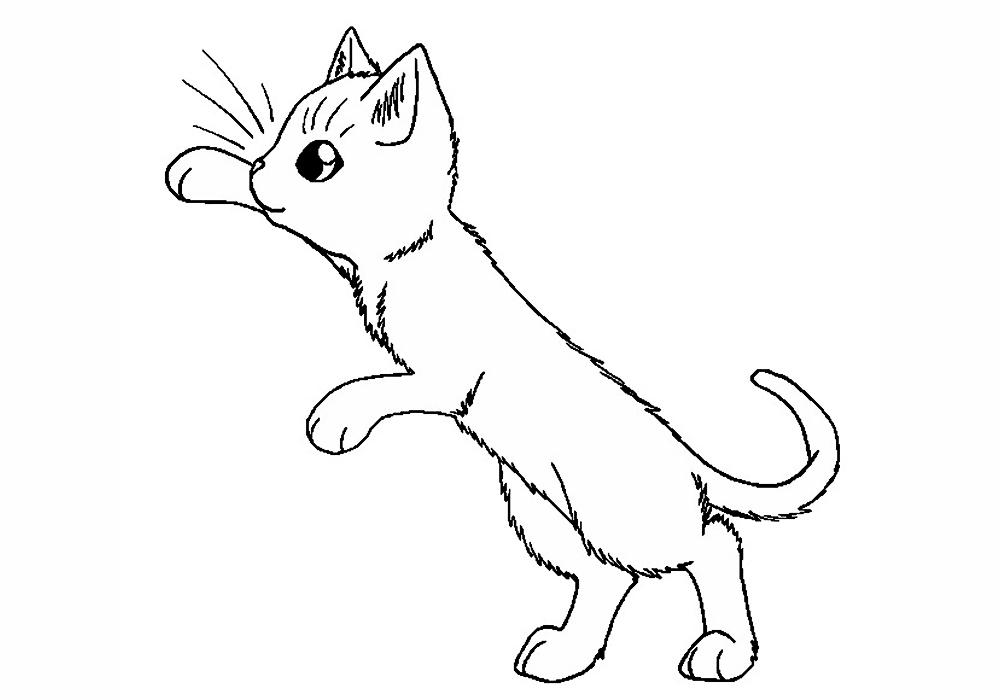Картинки котята черно белые раскраски, жене