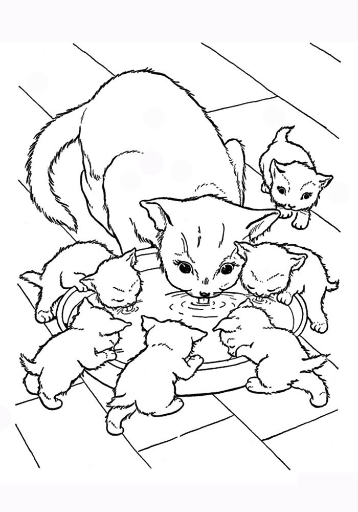 Рисунки кошек и котят