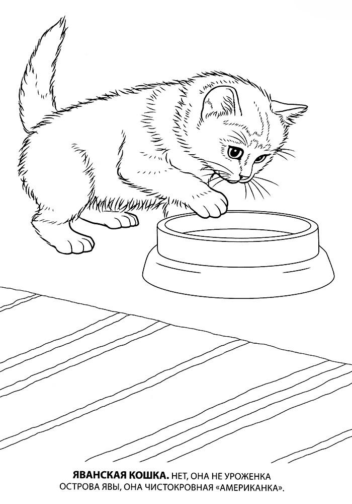Кошка раскраска для детей распечатать