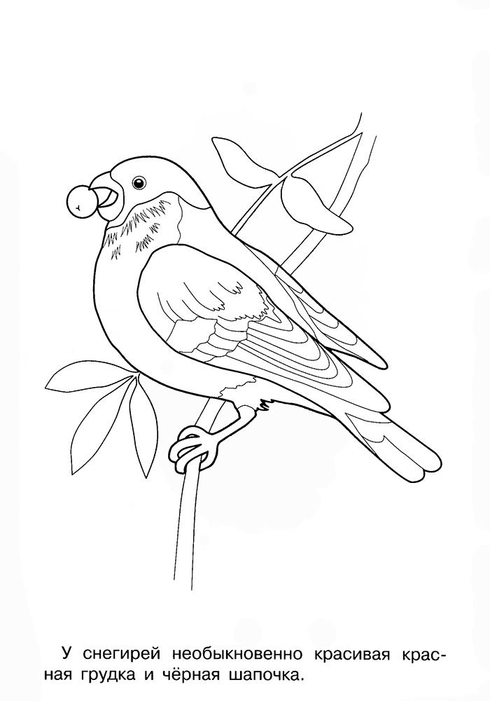 распечатать раскраски зимующие птицы грациозное