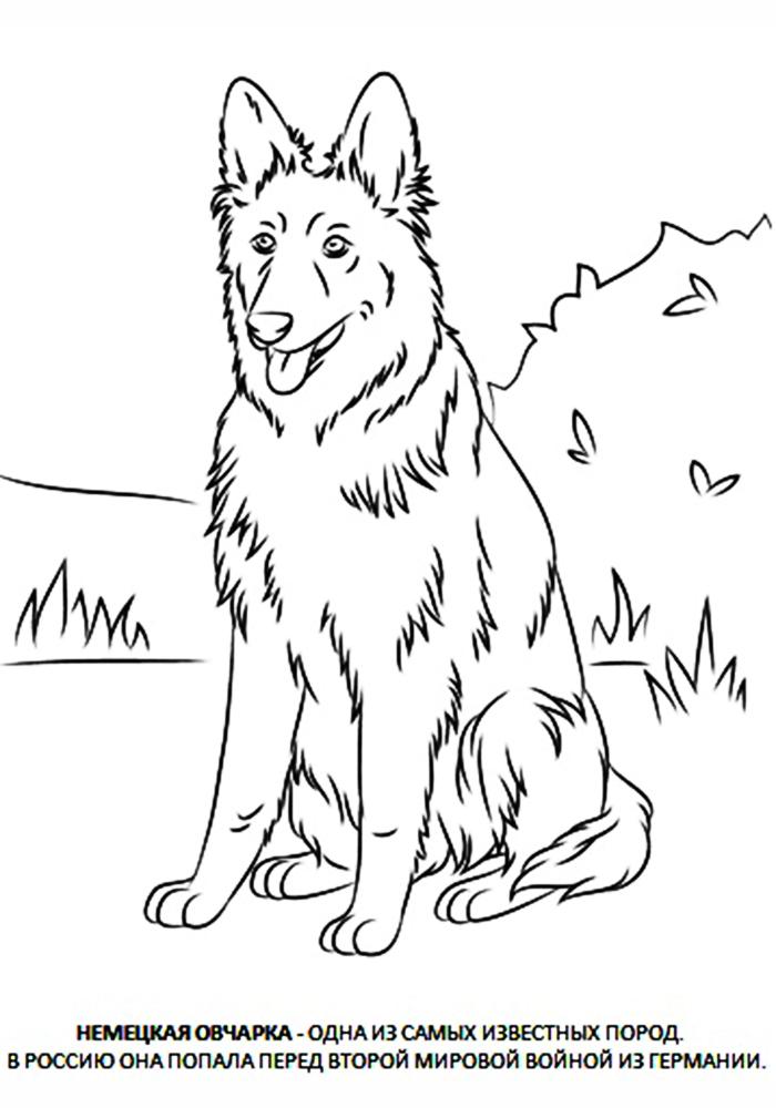 Урок рисования для детей собака фото