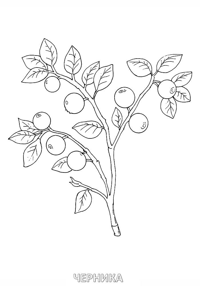 зимние картинки для рисования голубика лопатками называется ротором