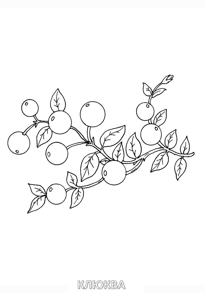 раскраска ягоды распечатать